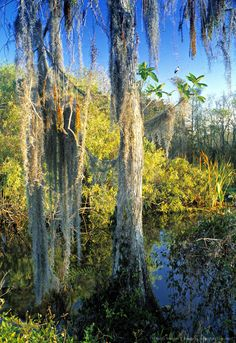 The Everglades are a network of wetlands & forests fed by a river flowing… River Of Grass, American Crocodile, American National Parks, Protected Species, Everglades National Park, West Indian, Bird Species, Days Out, World Heritage Sites