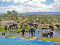 Cool off in our watering hole as you watch elephants play in theirs. A new adventure awaits at Four Seasons Safari Lodge Serengeti, Tanzania.