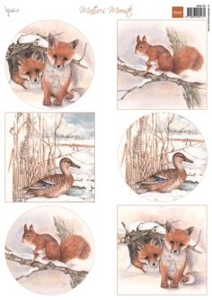 Mb0162 Mattie's winter animals - Foxes