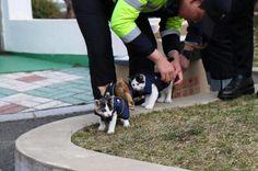 Nach einem Autounfall begraben die 3 Polizisten ihre Babys. Doch was die Katze dann tut, glaubst du nicht.