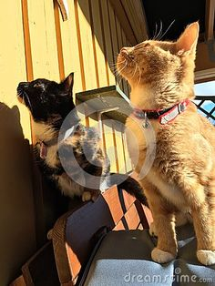 Photo about Two cats out on the porch. Image of abstract, outdoor, animal - 67907194 Porch, Stock Photos, Abstract, Cats, Outdoor, Animals, Image, Balcony, Summary