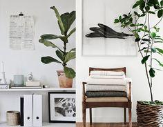 Planten stylen in huis? Zo doe je dat!