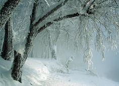 Снежное королевство