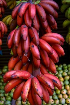 Red Banana Tree, Banana Fruit, Banana Plants, Fruit Plants, Fruit Garden, Fruit Trees, New Fruit, Fruit And Veg, Fruits And Vegetables