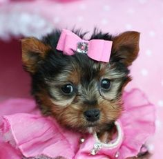 Why do they always put that silly pink bow in my hair? :(