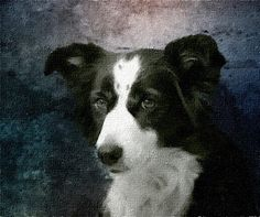 Portrait of the dog. Hand Painted Oil on Canvas from your Photo.