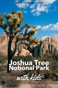 Are you planning a trip to Joshua Tree with kids? Here is everything you need to know before you go, including things to do, the best Joshua Tree hikes for families, and the best time of year to visit. #NationalParks #JoshuaTree #CaiforniaTravel Joshua Tree National Park, National Parks Usa, Best Spring Break Destinations, Family Vacation Destinations, Travel Destinations, Joshua Tree Hikes, Family Adventure, Adventure Travel, Family Travel