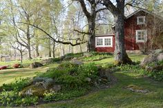 rabatt torp S fr du en gammeldags trdgrd Especially in a lovingly designed an… Green Garden, Garden Plants, Small Canopy, Foster House, Build A Fireplace, House In Nature, Red Cottage, Swedish House, How To Level Ground