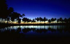 WALLPAPERS HD: Palm Silhouette Big Island Hawaii