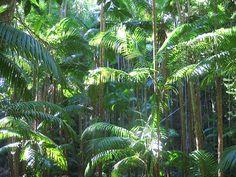 Fraser Island Jungle,, QLD, Australia