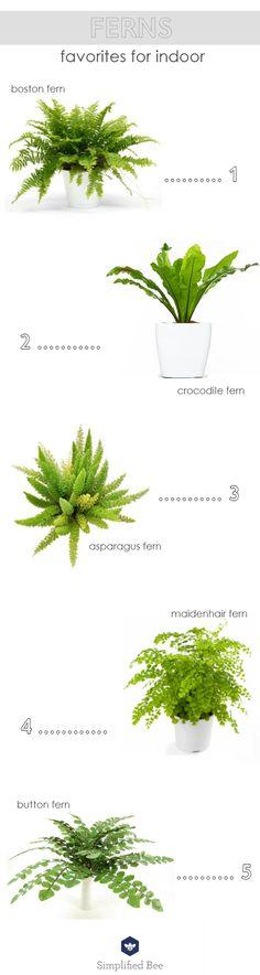 indoor fern plants // favorites from @simplifiedbee