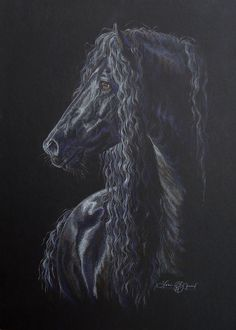 """Regal Presence $700 - 16""""x 20"""" original color pencil on black archival mat board. I have a personal connection to the Friesian breed and just can't resist sharing their amazing beauty with others. This one is the sire of my horse."""