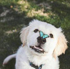 Butterfly Photo by @raisingteddy #wildliveplanet