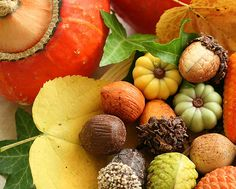 Beautiful fall colours