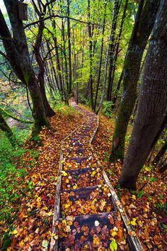 ✯ Autumn Path, Lithuania
