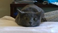 Cats Who Have The Best Human Reactions To Everyday Situations
