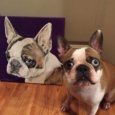 Our boston terrier portrait http://ift.tt/2j4URJ8