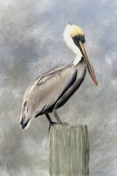 Pelican Painting by Renee Skiba