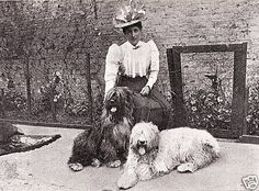 OLD ENGLISH SHEEPDOG LADY DOGS LOVELY LITTLE DOG PRINT