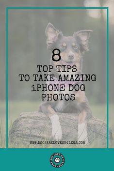 8 Top Tips To Take Amazing iPhone Dog Photos   Dog   Dog Photography   iPhone   iPhone Photos   Dog Photos