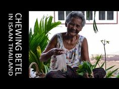 Chewing Betel Nut in Rural Thailand Isaan with gummy old grannies. Ingredients of betel chewing include Areca nut, betel leaf and sandstone paste. Traditions and Culture in rural Thailand (Isaan) by http://potatoinrice.com/