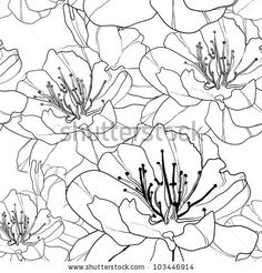 Black And White Flowers Stock Photos, Images, & Pictures   Shutterstock