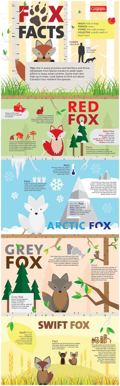 Explore this infographic to find out more about Canada's four resident fox species.