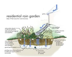75 Beautiful Rain Garden You Should Have In Your Home Front Yard 350 75 Beautiful Rain Garden You Sh Water Garden, Garden Plants, Rain Garden Design, Rainwater Harvesting, Dry Creek, Native Plants, Garden Planning, Amazing Gardens, Land Scape
