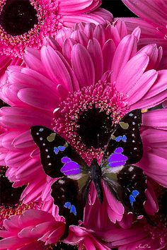 GIFS HERMOSOS: floresencontradas en laweb