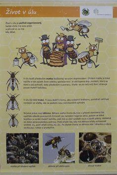 Tag der Erde - Bienen, Projektmensch und seine Welt (CZ.1.07 / 1.1.32 / 01.0034) - ZŠ Jesenice, okr. Rakovník - #Bienen #CZ107 #der #Erde #Jesenice #okr #projekt #Projektmensch #Rakovník #seine #Tag #und #Welt #ZŠ Indoor Activities For Kids, Bugs And Insects, Scandal Abc, Animal Crafts, Science And Nature, Animal Pictures, Montessori, Kindergarten, Preschool