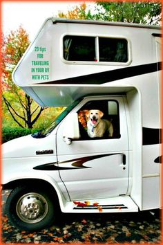 Traveling with pets in a recreational vehicle is fun, but it also requires planning.