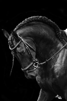 Amazing plait! My horses don't have very long manes so I can't do this with them.