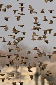 Flock, Etosha, Namibia, by Tracy Sparkes