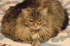 Playful Paws: 18 Pics of Cute Cats Relaxin' - Pet360 Pet Parenting Simplified