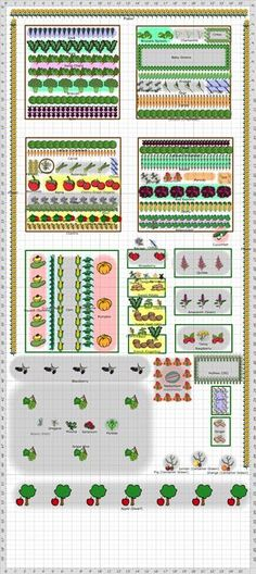 Kitchen Garden: Vegetables & Edible Flowers, Companion Planting
