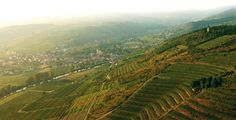 Curious about Austrian Wine? Here's almost everything you need to know for start tasting by yourself...
