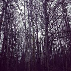 Trees... #trees #forestheights #Portland #oregon #nature #mybackyard