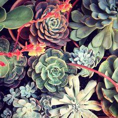 Compañía Botánica Propagating Succulents, Succulent Gardening, Planting Succulents, Mini Cactus, Concrete Garden, Family Room Decorating, Colorful Garden, Planter Boxes, Air Plants