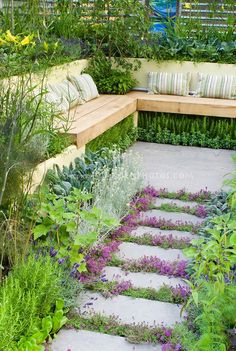 Thyme herbs blooming in crevices of stepping stones. Walkway with herbs and lettuce vegetables: rosemary Rosmarinus, Salvia officinalis, Lavandula lavender, dill, kale, patio, Garden benches with pillow cushions