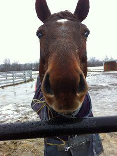 "Love horses - ""Please tell Santa to stop at the barn!"""