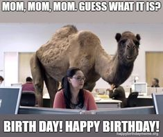 The simple act of sending funny happy birthday mom memes can bring a smile to a mother's face. Here are 101 happy birthday memes to help you get started.