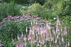 Monarda 'Violet Queen' and Veronicastrum 'Lavendelturm'. Coton Manor Garden, Coton, Northhamptonshire
