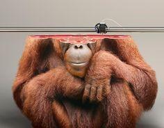 Gefährdete Tierarten aus dem 3D-Drucker