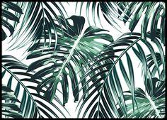 Botanische poster met tropische bladeren. Poster die mooi is in een collage met meerdere botanische poster of als kleuraccent in een zwart-witte fotowand. We hebben een breed assortiment van mooie botanische prints en posters. www.desenio.nl