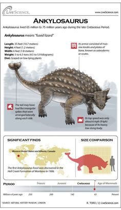 Infographics to a few species of dinosaurs and articles about their fossils and which museums you can see them in across America.