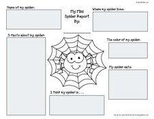 spider web graphic organizer pdf