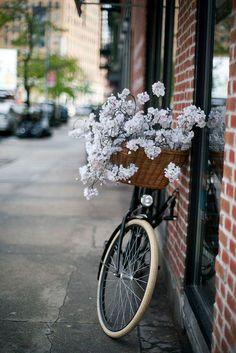 The Bike Basket Girl®: fotografia