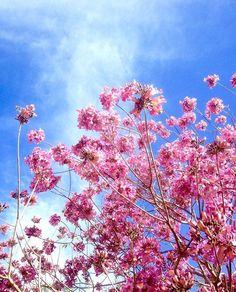 @pattyvariboa captures a #candyminimal cherry blossom.