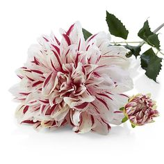 Pink and White Striped Dahlia Artificial Flower Stem | Crate and Barrel