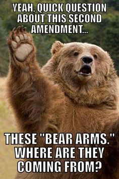 For the Fun of It ~ This *Bear Believes It is better to Lasso that Sucker. This Grizzly makes a Plea! Please, Forget The Right to *Bear Arms, The Second Amendment, altogether! ~ It could make the *Bear Population, Extinct ! Baby Animals, Funny Animals, Cute Animals, Funny Koala, Baby Pandas, Funny Bears, Animals Images, Wild Animals, Beautiful Creatures